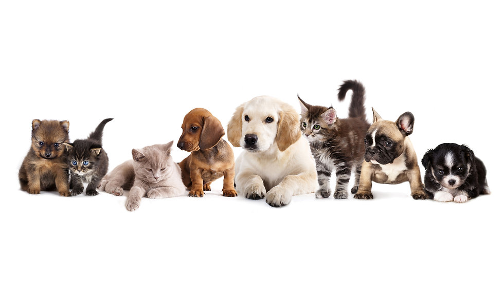Hund-Katze-Gruppe-WEB.jpg