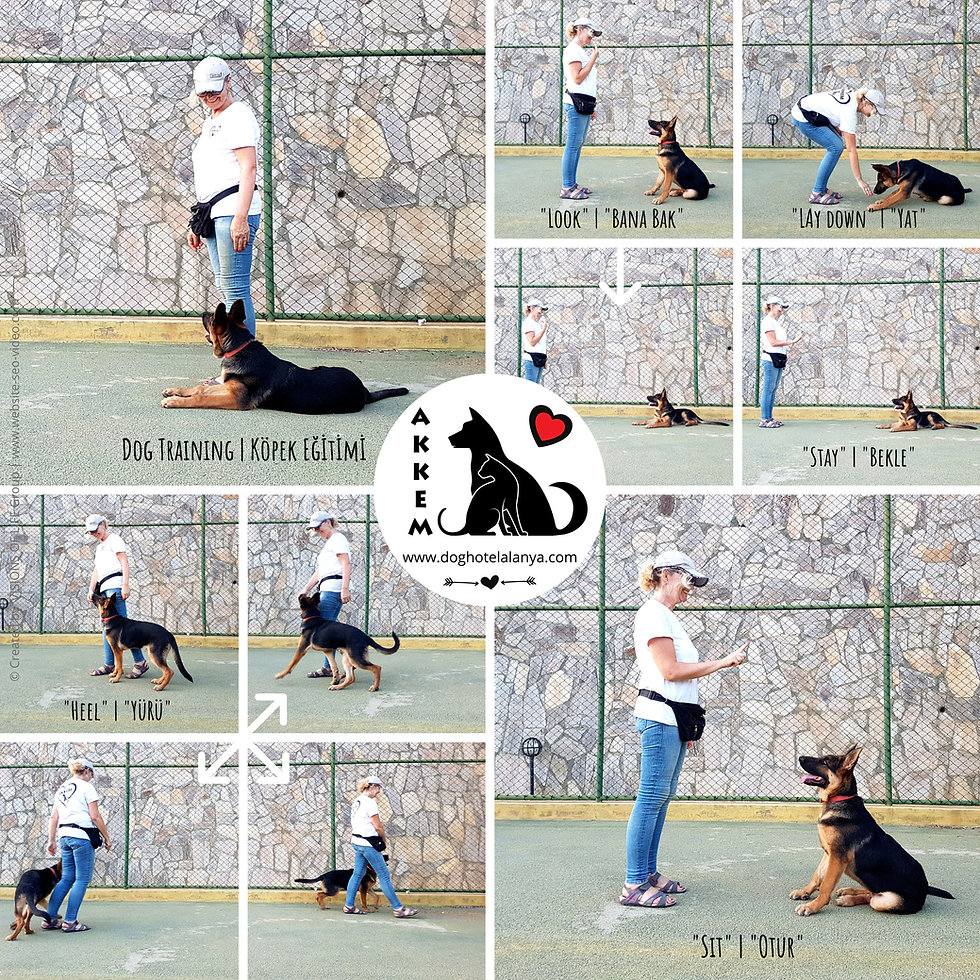AKKEM-Dog-Training-WEB.jpg
