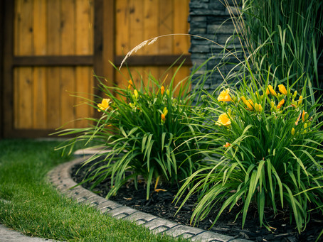 Tips to maintaining a beautiful yard