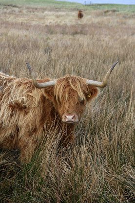 A Friendly Face on the Isle of Mull, Scotland