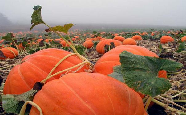 Stifanuts Ukraine Pumpkin Seeds 1