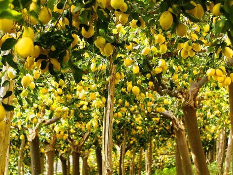 Lemon Linguine