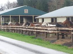 Main Barn Paddocks