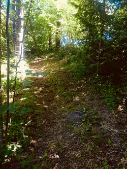 New Riding Trail on Site
