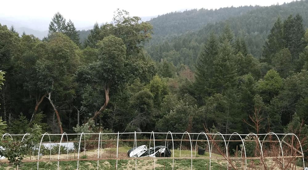 cannabis farms for sale humboldt