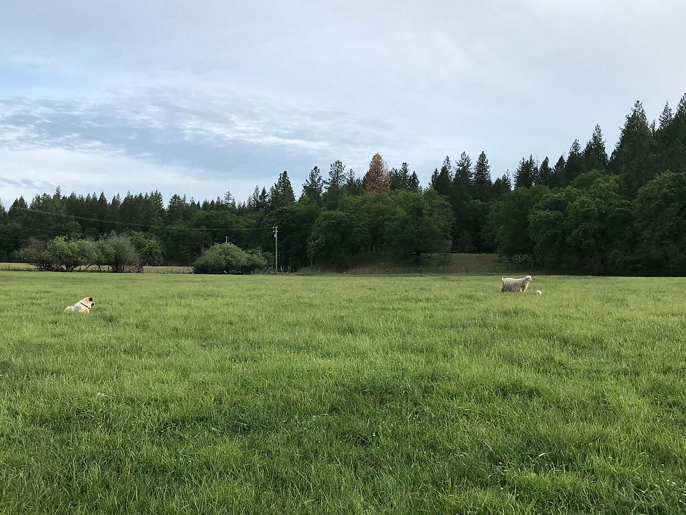 land in hayfork for sale