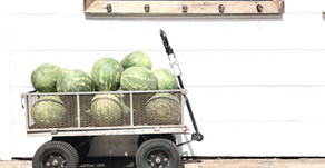 You're One in a Mellon: The Benefits of Watermelon