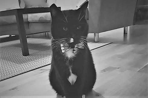 Kötturinn Álfur - Álfur the cat