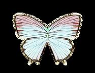 PapillonB.png