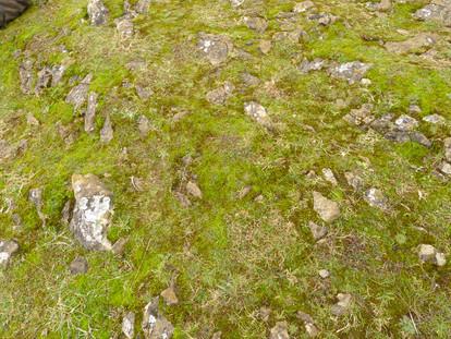 Sand Point Cheilothela chloropus habitat 0217.jpg.JPG