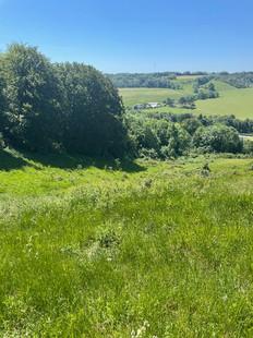 Suitable habitat valley.jpg
