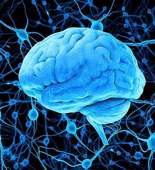 brain-and-neurons.jpg