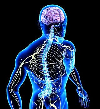 brain-and-nerves1_edited.jpg