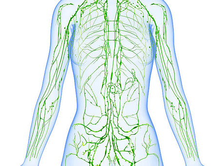 The Lymphatic System - Housekeeping for your Organs