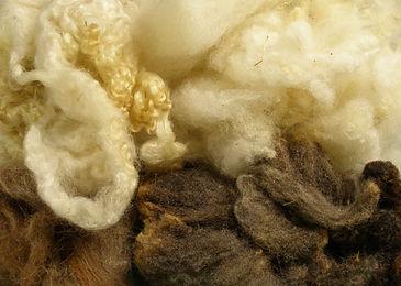 wool fibers.jpg