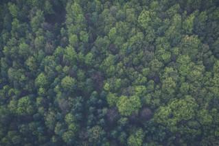 وكالة ناسا تنشئ أول غطاء نباتي لغابة الأمازون المطيرة لتتمكن من تقدير آثار الجفاف، تغيّر مُناخي