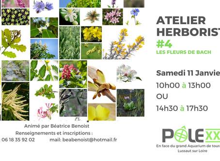 Atelier Herboristerie #4 / Fleurs de Bach / Samedi 11 janvier / 10h00 -13h00 ou 14h00-17h00