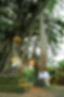 ウブド, 撮影, フォトツアー, バリ島, ウブドタウン, 街中, 寺院