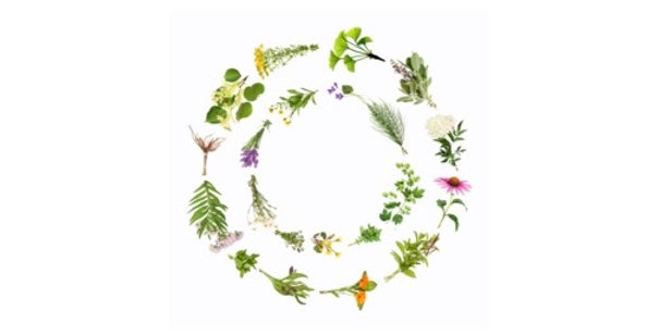 Eyes Relief Herbal Tea 空間醫學能量草本 - 明目亮眼方