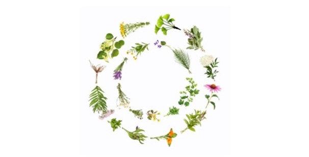 Better Sleep Herbal Tea 空間醫學能量草本-舒眠方