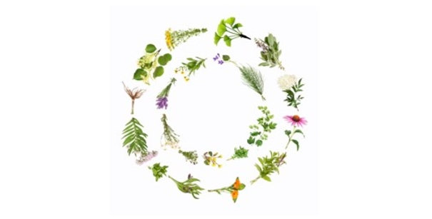 Sore Throat Care Herbal Tea 空間醫學能量草本- 風熱感冒方
