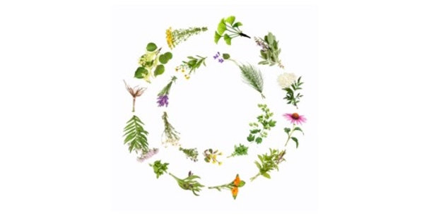 Lower Body Wellness Herbal Tea 空間醫學能量草本-下焦方