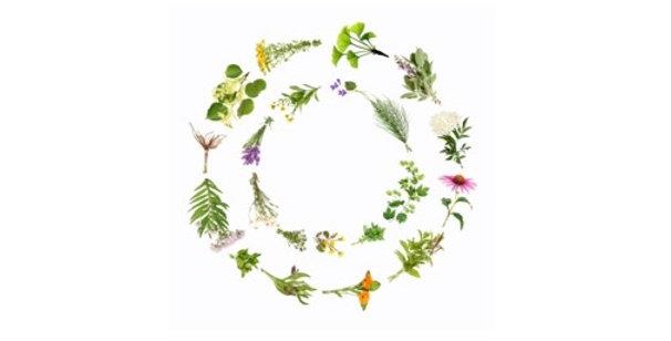 Lower Back Relief Herbal Tea 空間醫學能量草本 - 腰椎方