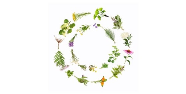 Cold Symptom Relief Herbal Tea 空間醫學能量草本 - 風寒感冒方