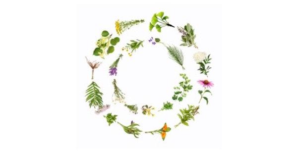 Wellness Booster Herbal Tea 空間醫學能量草本-太極能量方