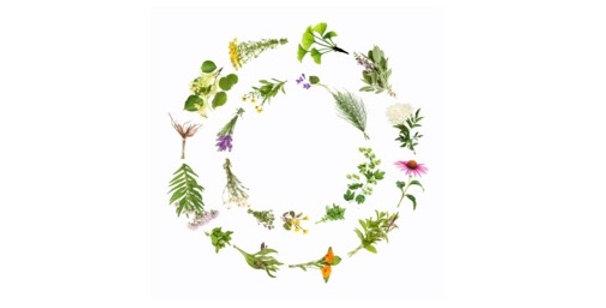 Sinus Relief Herbal Tea 空間醫學能量草本- 過敏性鼻炎