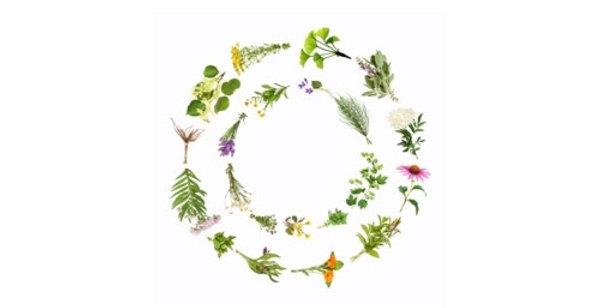 Headache Relief Herbal Tea 空間醫學能量草本 - 頭方