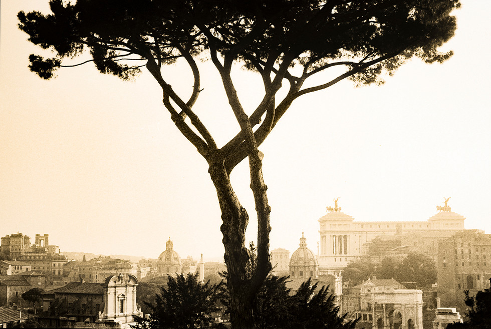 Rome w Tree copy.jpg