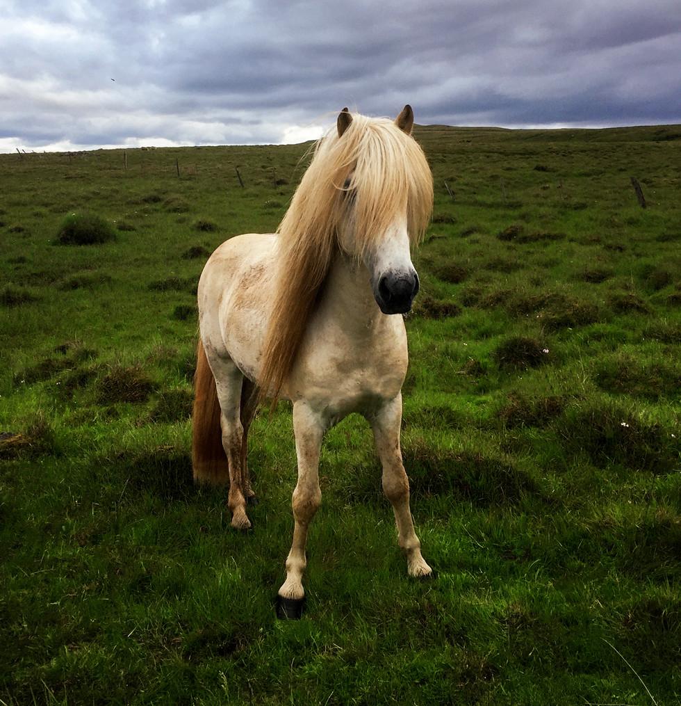 pony rock star.jpg