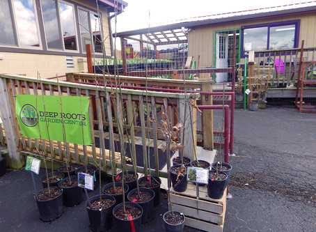Deep Roots Garden Center: A New Source for Local, Organic, and Native Plants on B-town's East Side