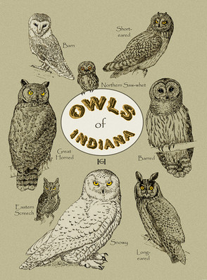 Owls of Indiana note card