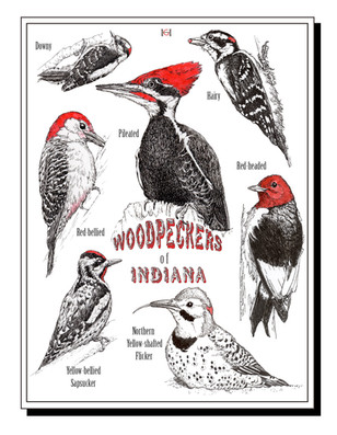 Indiana Woodpeckers note card