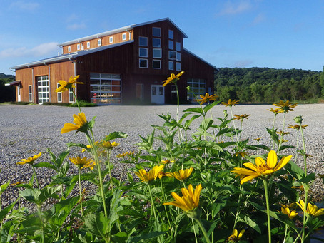 Eco Logic Native Plant Nursery: Growing a Seed Bank for Southern Indiana Gardens and Landscapes