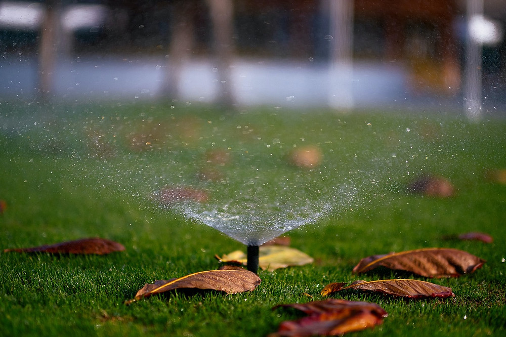 A sprinkler system waters a green lawn