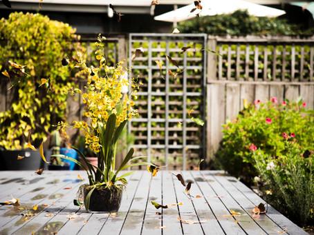 Get Savvi about Spring Home Maintenance