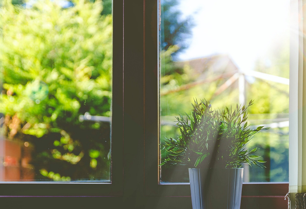 Sunrays shine through a window on a spring day while a plant on the windowsill soaks up the light.