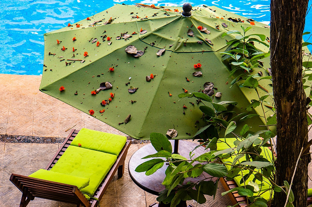 A green umbrella near a pool with leaves on it