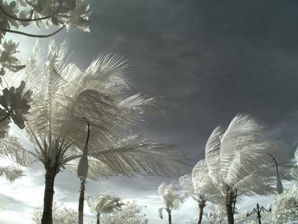 Get Savvi About Hurricane Preparedness