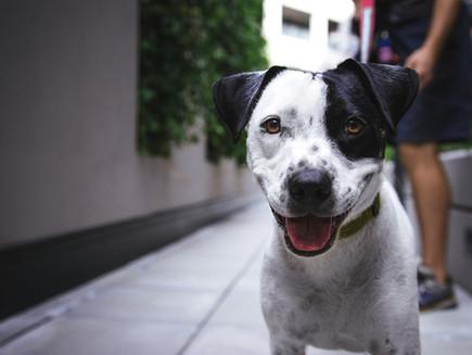 Keep Your Pets Savvi Safe at Home