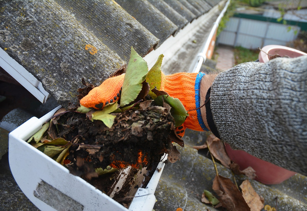 A homeowner wearing gloves cleans dirt and small plants out of a gutter.