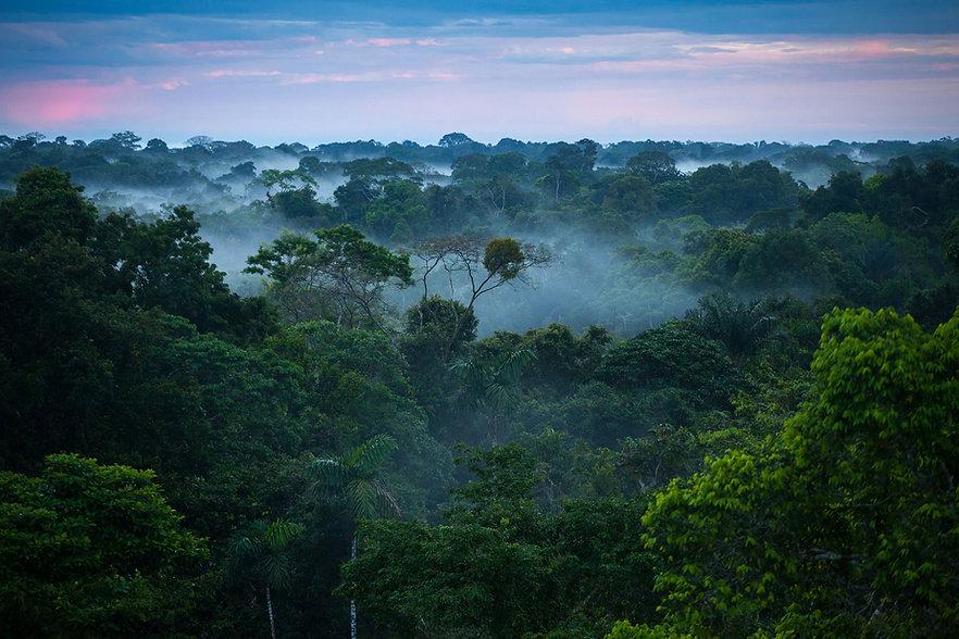 Rainforest_2880x1920-2880x1920.jpg