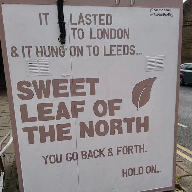 Sweet leaf of the north