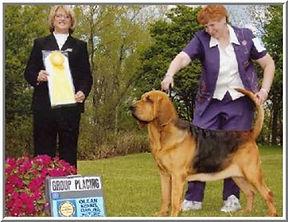 Past Bloodhound.jpg