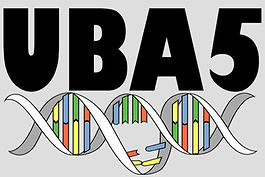 UBA5 Founation logo.jpeg