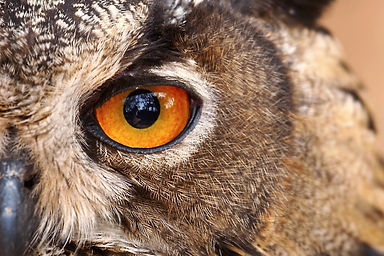 Use your Owl Brain's slow deliberate reasoning but recognize its limitations.