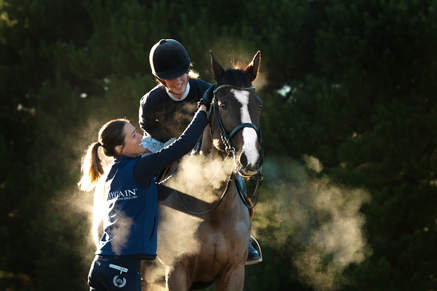 Dressage Training Horse